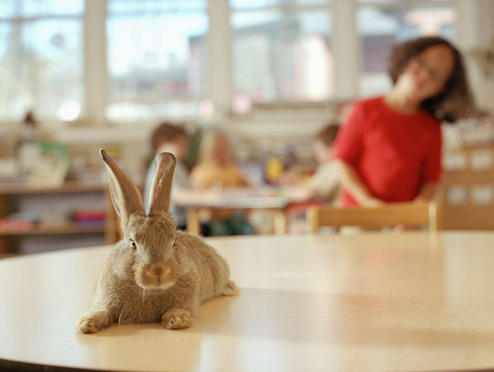 NICHT MEHR VERWENDEN! - Kaninchen Schule