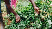 »Der reiche Westen sollte nicht unterschätzen, was es heißt, wenn Nahrung knapp ist«