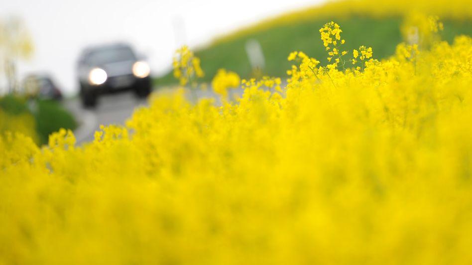 Rapsfeld: Der Anbau von Ölpflanzen konkurriert mit der Lebensmittelherstellung