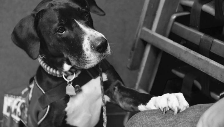 Hunde für Kriegsveteranen: Streicheleinheiten für verletzte Seelen