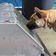 Bundeswehr testet Diensthunde als Corona-Schnüffler