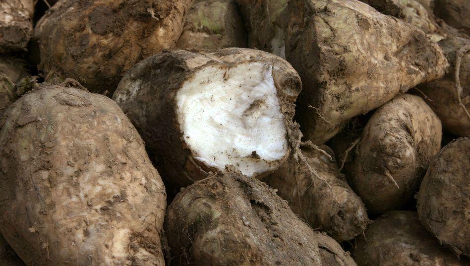 Zuckerrüben: In Schnitzeln für Tierfutter war mehr Dioxin als erlaubt