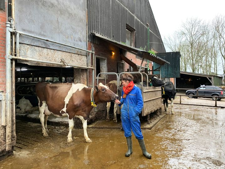 75 Kühe gibt es auf dem Hof der Zents