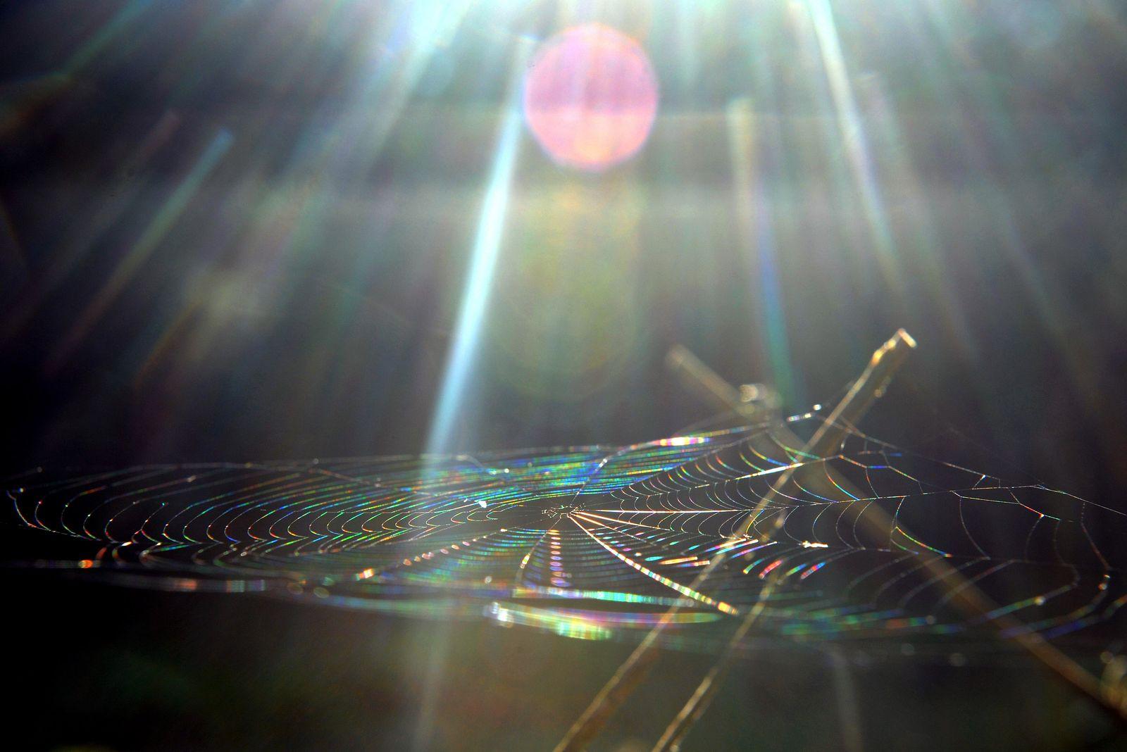 Spinnennetz erstrahlt in Regenbogenfarben