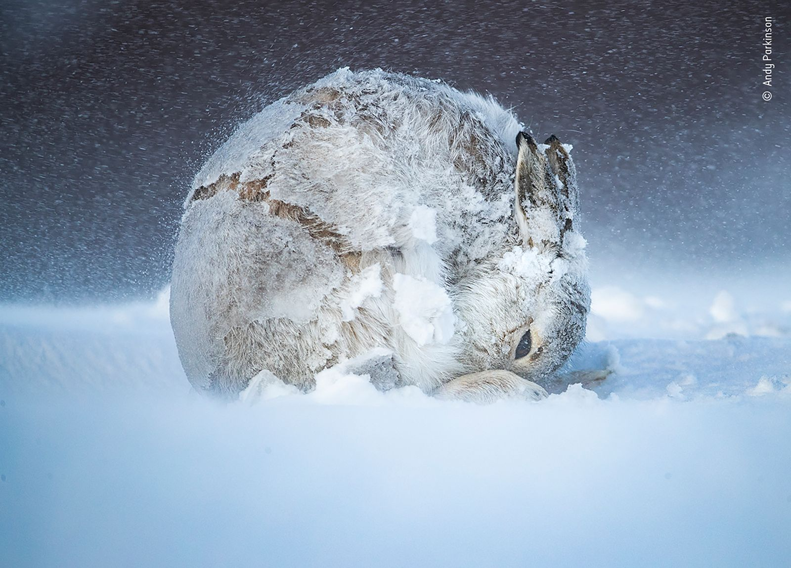 Hare ball by Andy Parkinson, UK
