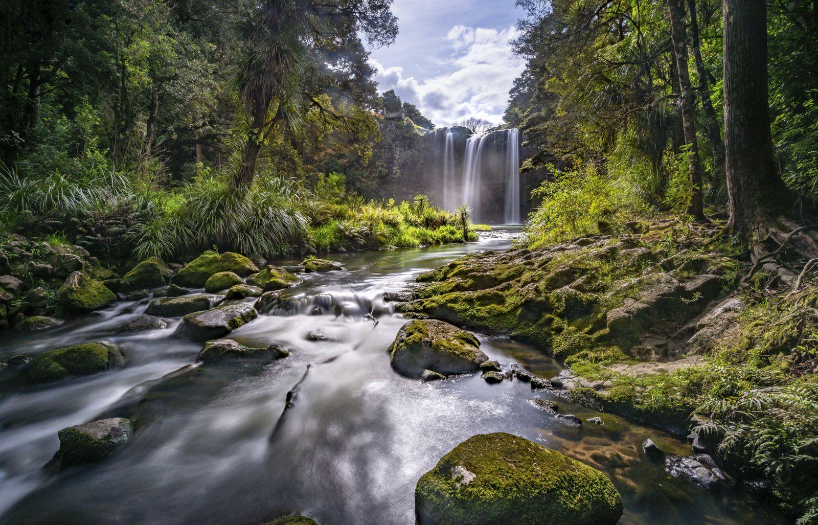 Wasserfall Whangarei Falls Fluss Hatea Whangarei Falls Scenic Reserve Northland Nordinsel Neus