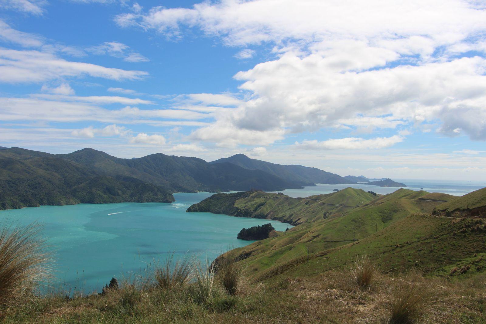 EINMALIGE VERWENDUNG Neuseeland Fewo / Claus Hecking