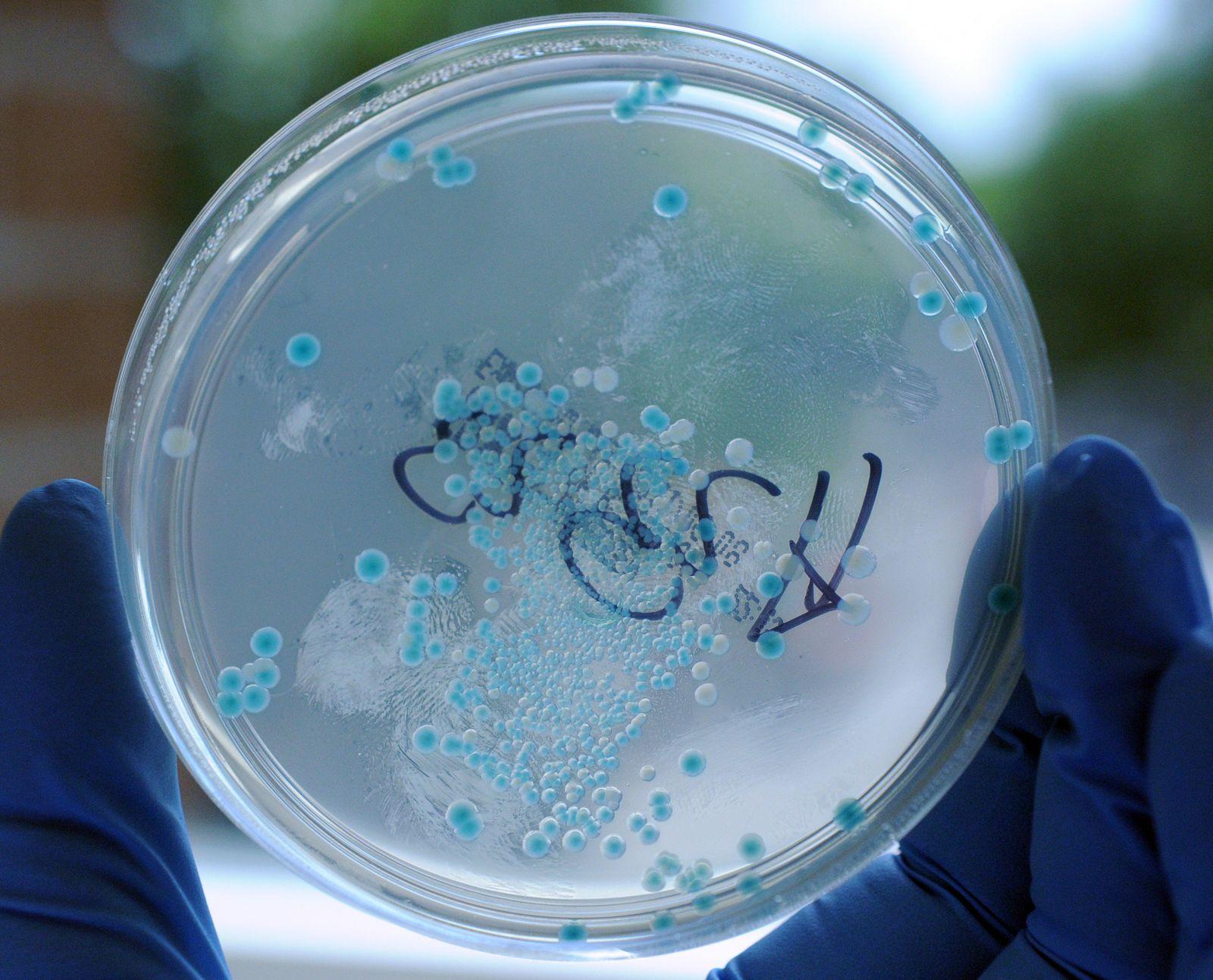 Bakterien E.coli