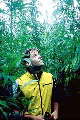Kevin in Heaven: Oops, ein riesiges Marihuanafeld...