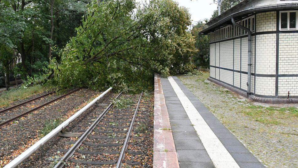 Baum auf Bahn-Gleisen