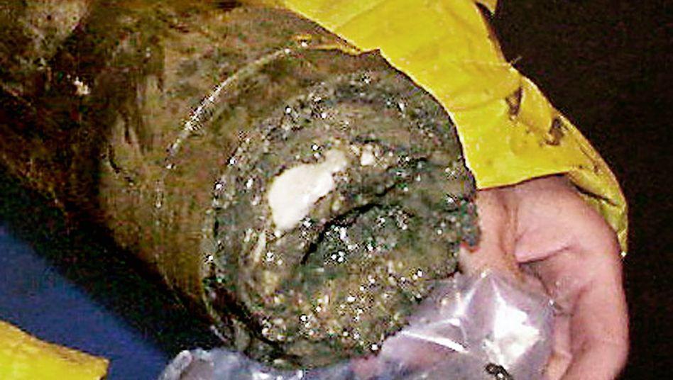 """Methanhydrat in einem Bohrkern (Archivbild): """"Schlote von Methanblasen"""""""