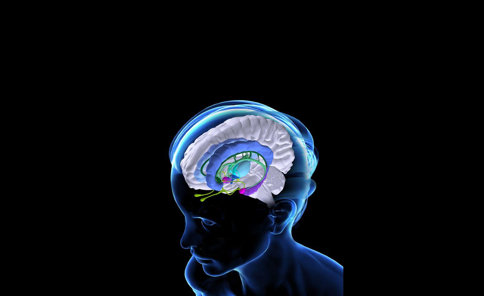 NICHT MEHR VERWENDEN! - Illustration Gehirn