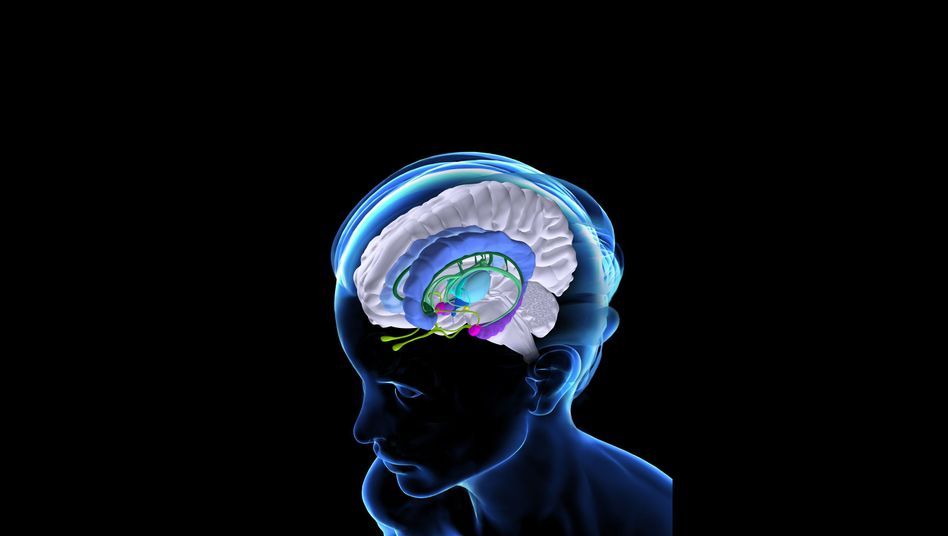 Anatomie des Gehirns: Zentrale der Zahlenerkennung in der äußeren Hirnrinde