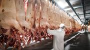 Klöckner fordert rasche Abnahme schlachtreifer Schweine
