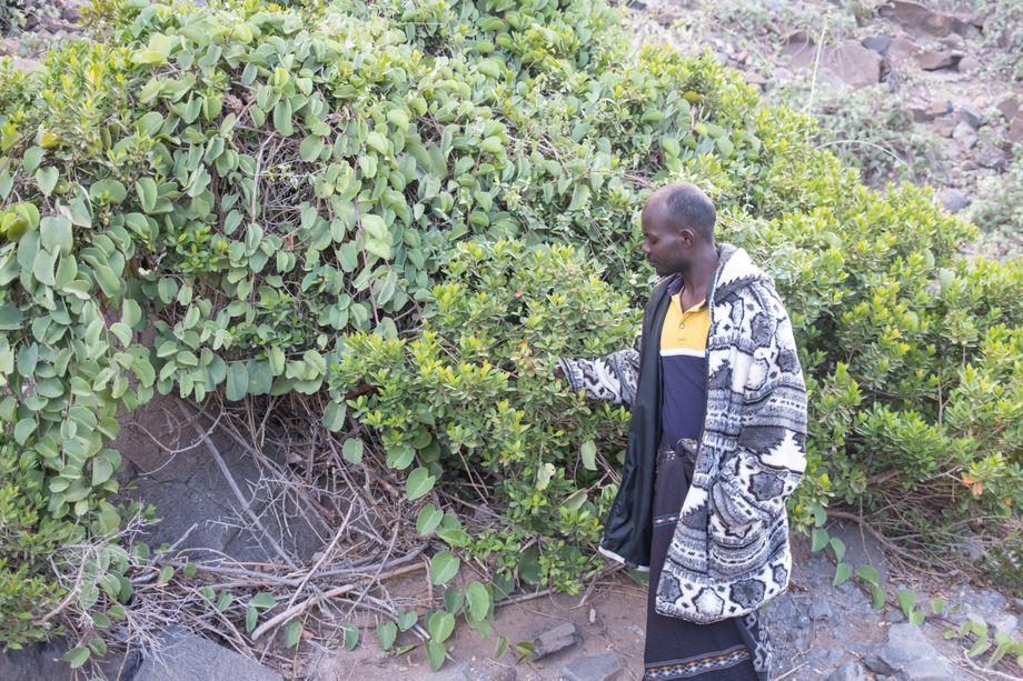 Schulleiter Ahmed Gaber: »Wir klagen, dass unsere Tiere nichts mehr zu fressen finden, aber wissen nicht, wie man Sträucher und Bäume pflanzt.«