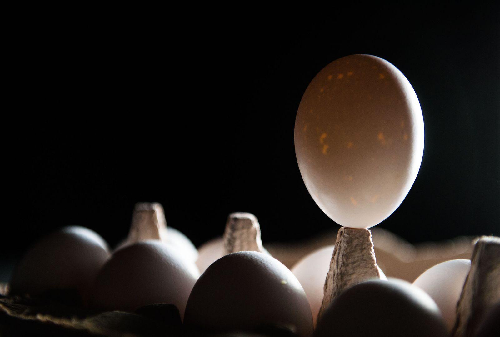 Skandal um belastete Eier