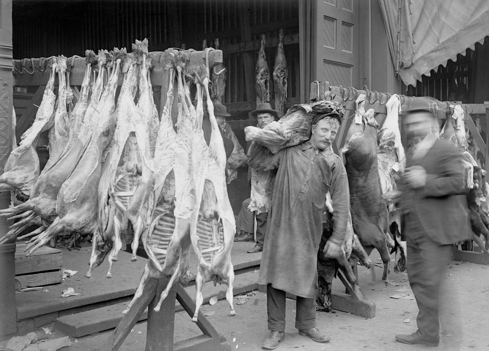 Man Beside Carcasses During The 1904 Stockyards Strike
