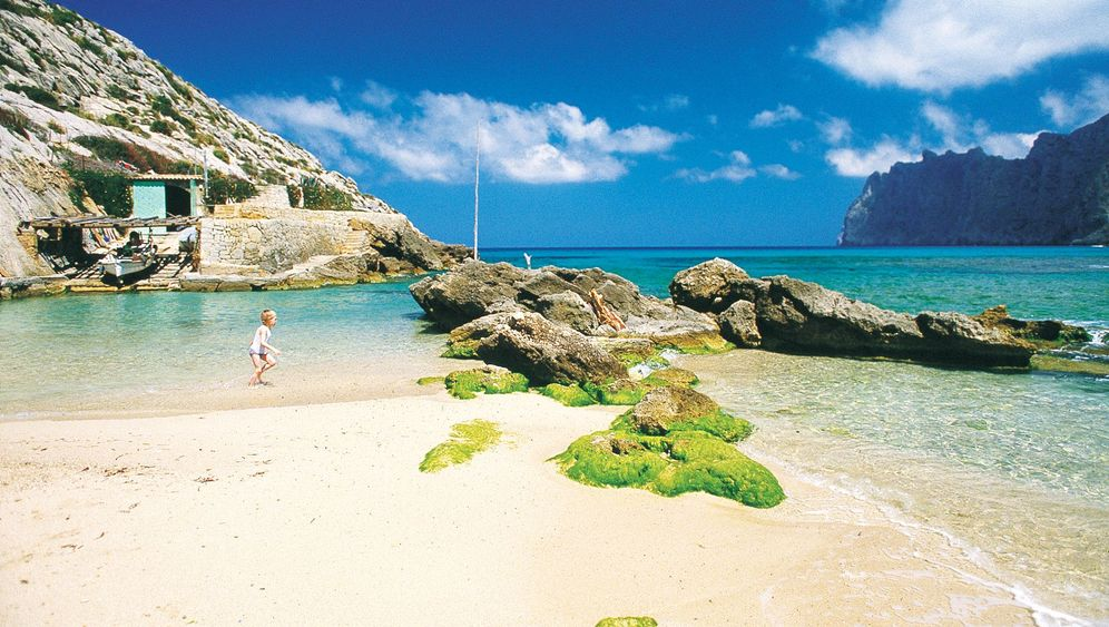 Mallorcas Küsten: Im Mai zur Meerfenchel-Ernte