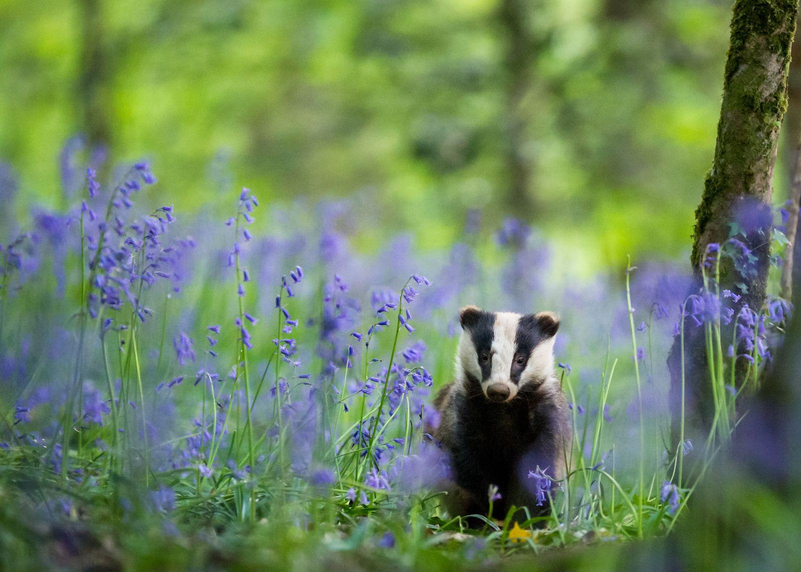Nature TTL POTY 2020/ Wildlife