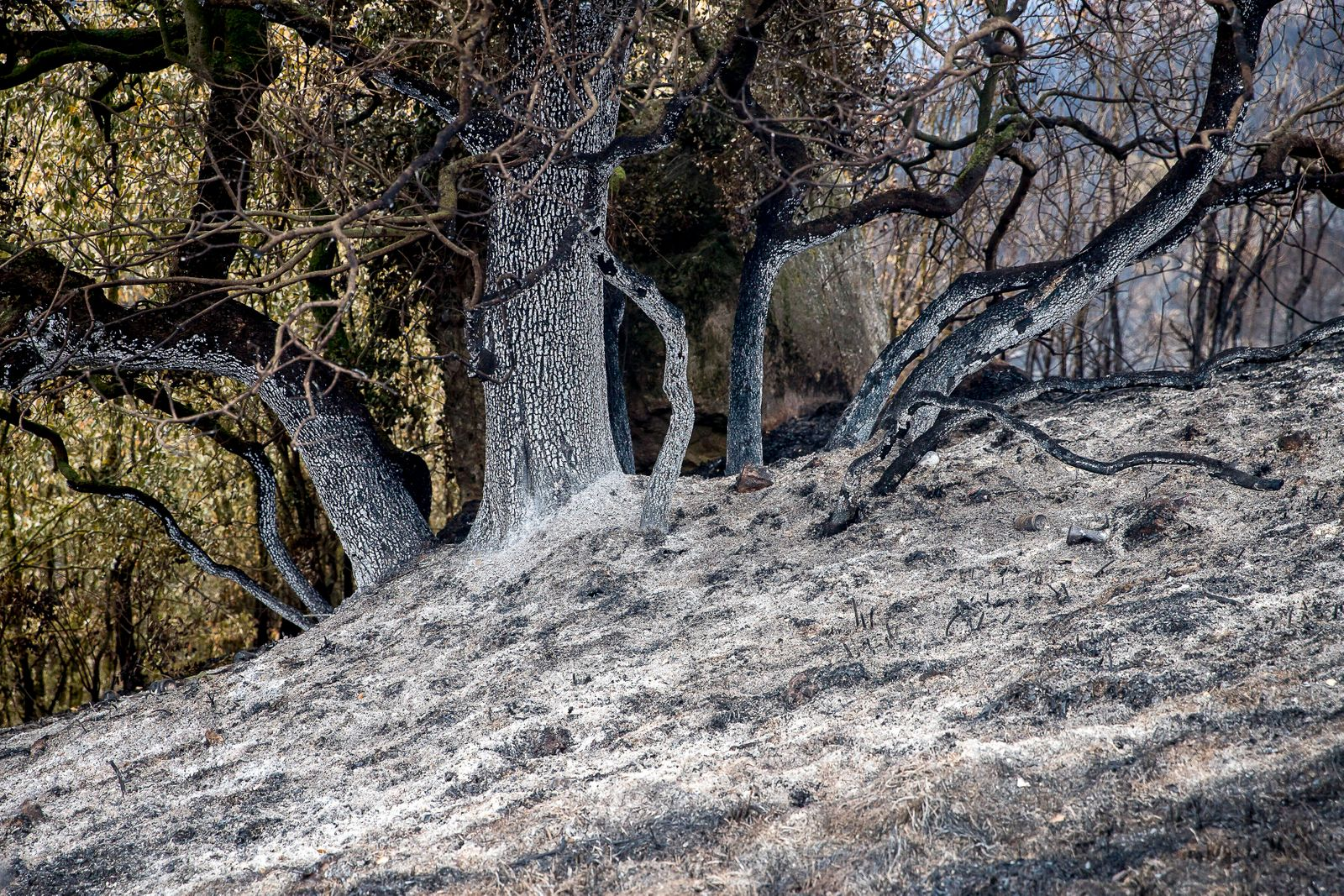 Wildfire In Catalonia Firefighters and volunteers are working to stop the wildfire in the counties of Anoia and Conca de