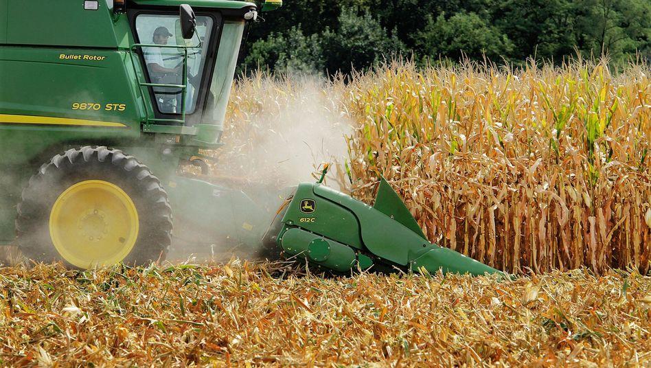 Mais-Ernte in den USA (Archivbild): Gefahr durch gentechnisch verändertes Getreide?