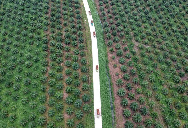 Früher war hier auf Sumatra Wald, der die lokale Bevölkerung ernährte. Heute: Palmölplantagen, so weit das Auge reicht