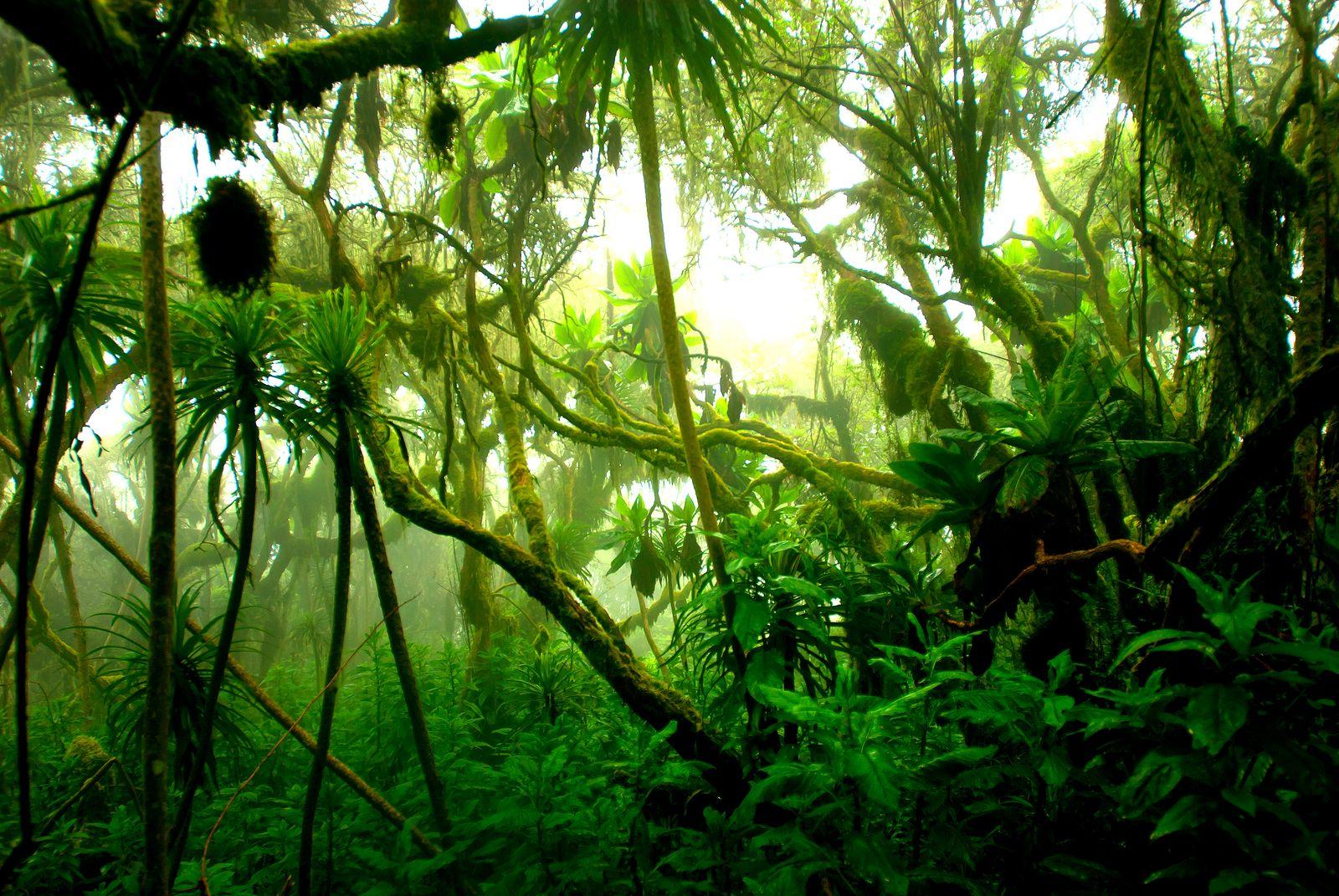 EINMALIGE VERWENDUNG Dschungel