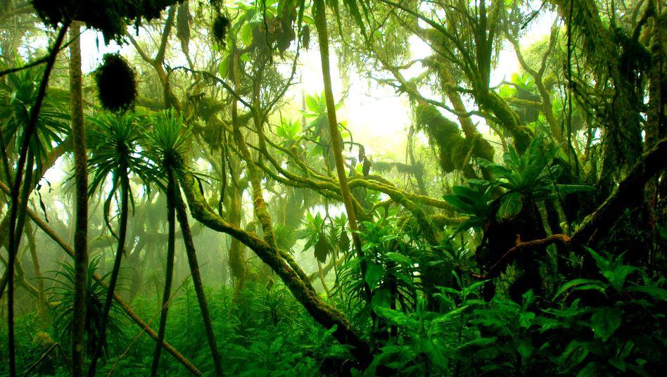 Dschungel in Uganda: Fluchtpunkt ins Nirgendwo