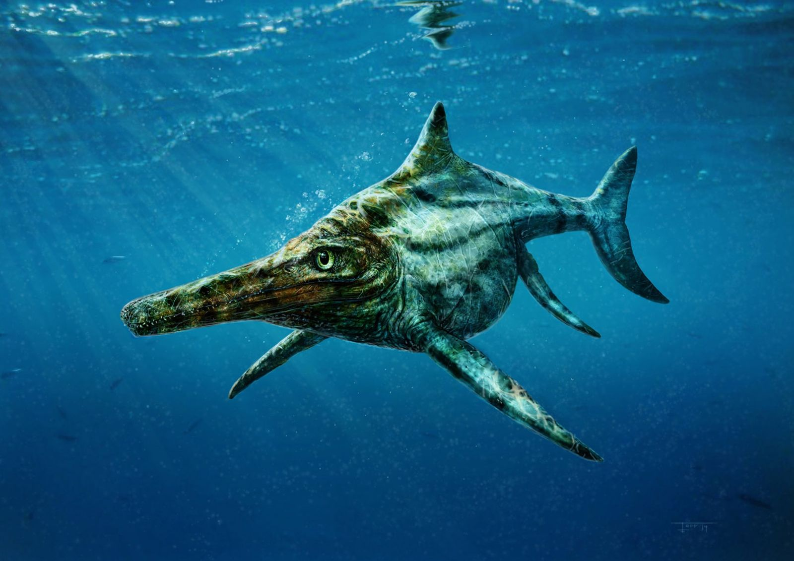 Meeresreptil / Ichthyosaurus