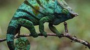 Die Reptilienschleuser