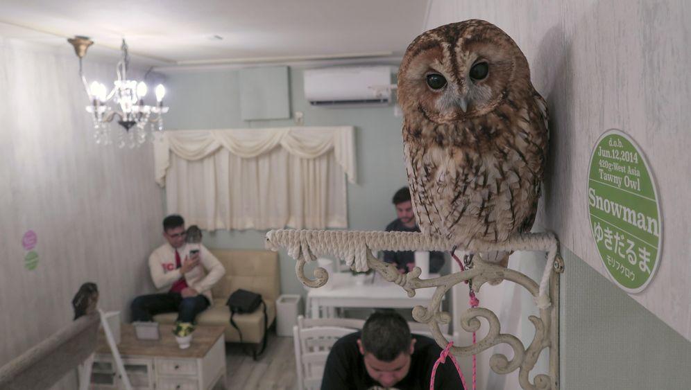 Im Fokus der Eule: Vogel-Café in Tokio-Akihabara