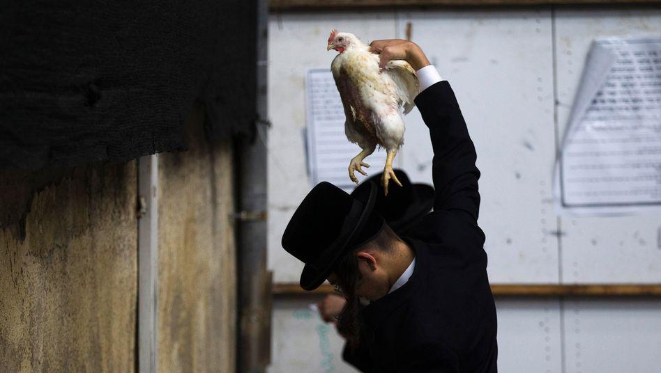 Kapparot, das traditionelle Hühnerschwenken, ist ein jüdisches Ritual am Vorabend von Jom Kippur