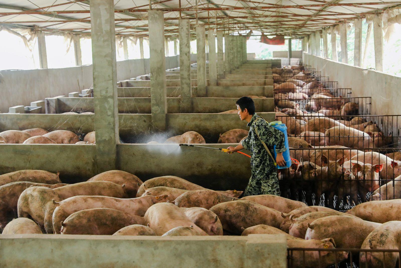 Man disinfects a pig farm in Guangan, Sichuan