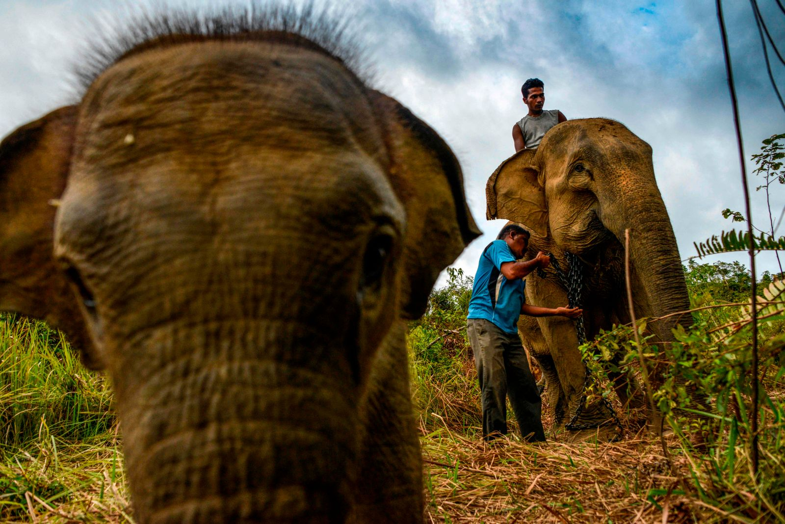 TOPSHOT-INDONESIA-ANIMAL-ELEPHANT