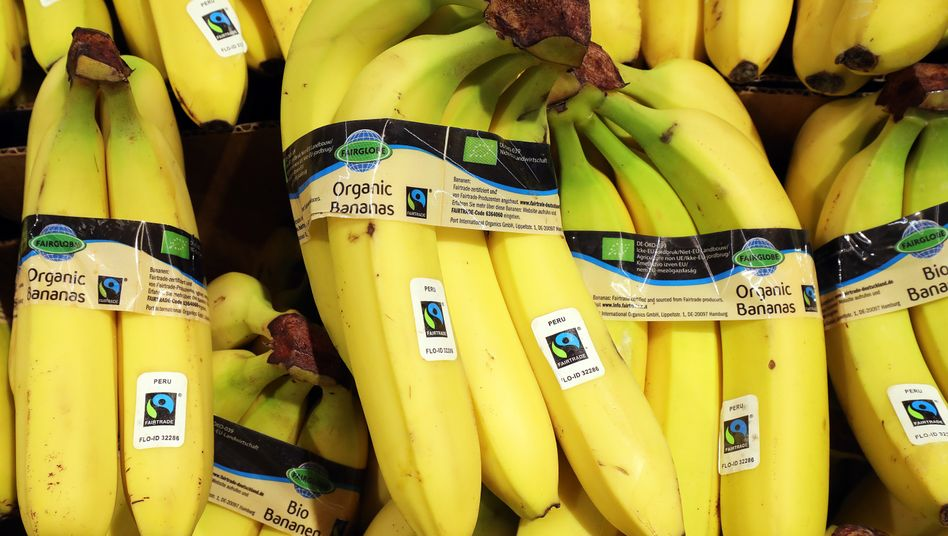 """""""Fairtrade""""-Bananen im Supermarkt: Marktanteil von 20 Prozent"""