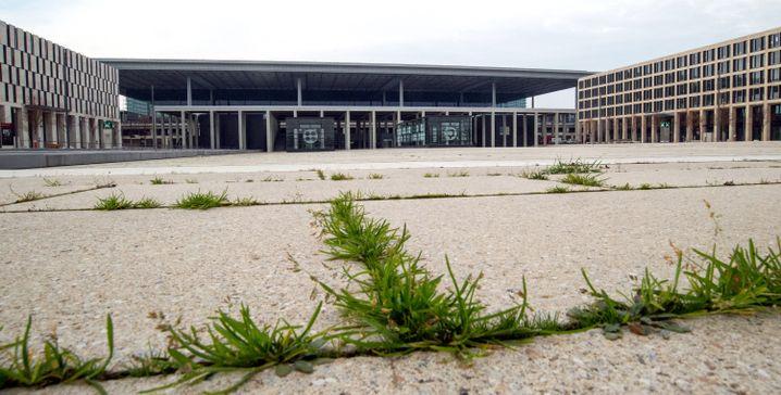 Bis zur Documenta 2017 soll das BER möglichst vollkommen überwuchert sein, damit erschütterte Betrachter des Kunstwerks Trost in der Natur finden.