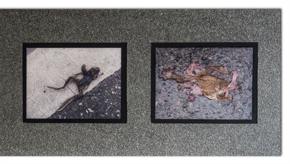 Letzte-Hilfe-Set: Holzspachtel und Birkenkreuz