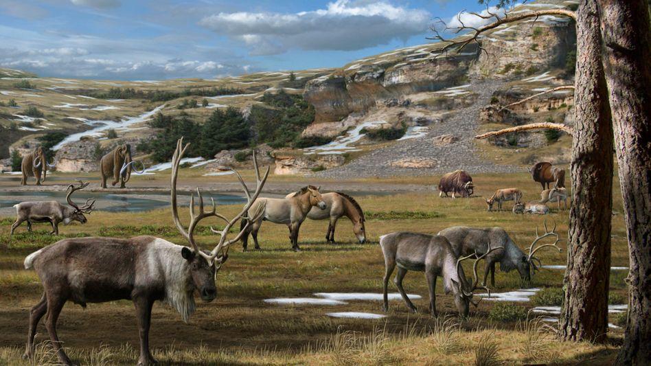 Winterspeck durch Kräuterfraß: Rentier, Bison und Mammuts in der arktischen Tundra