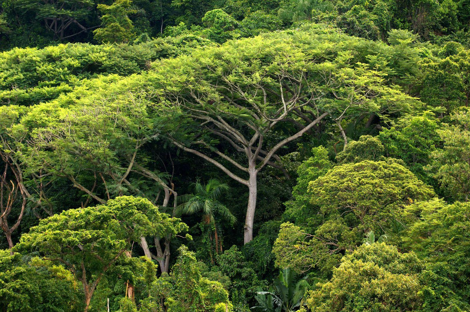 Tropischer Regenwald / Brasilien