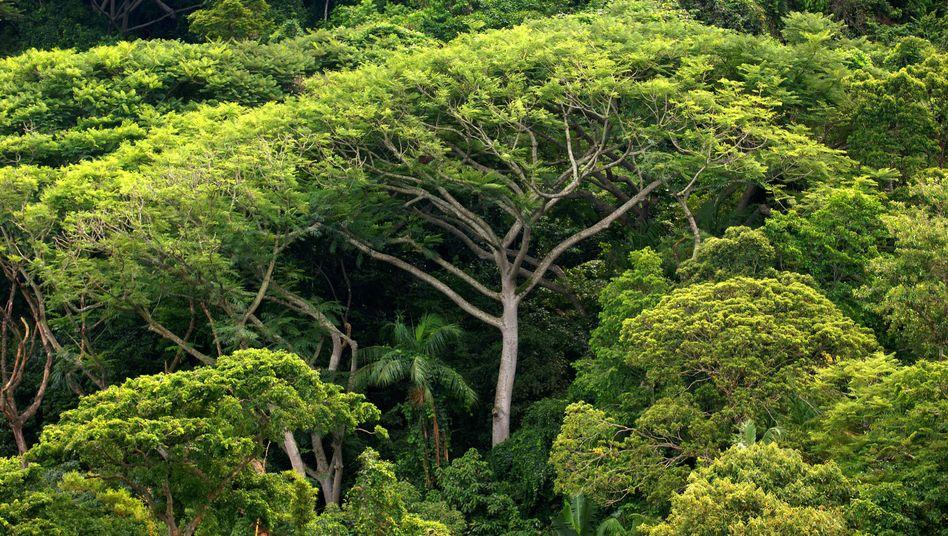 Brasilianischer Regenwald (Symbolbild): Mit Abhörstationen überwachen Biologen die Artenvielfalt