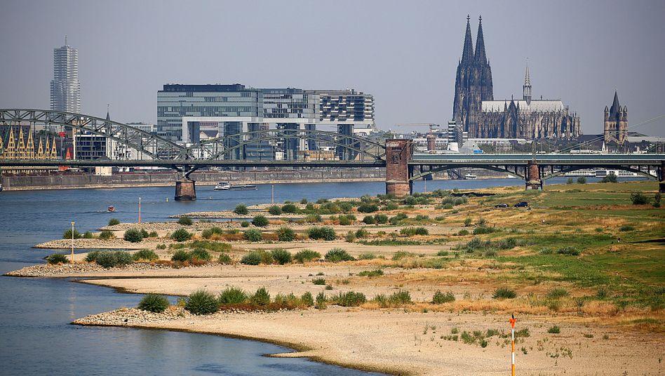 Der Rhein führt derzeit Niedrigwasser
