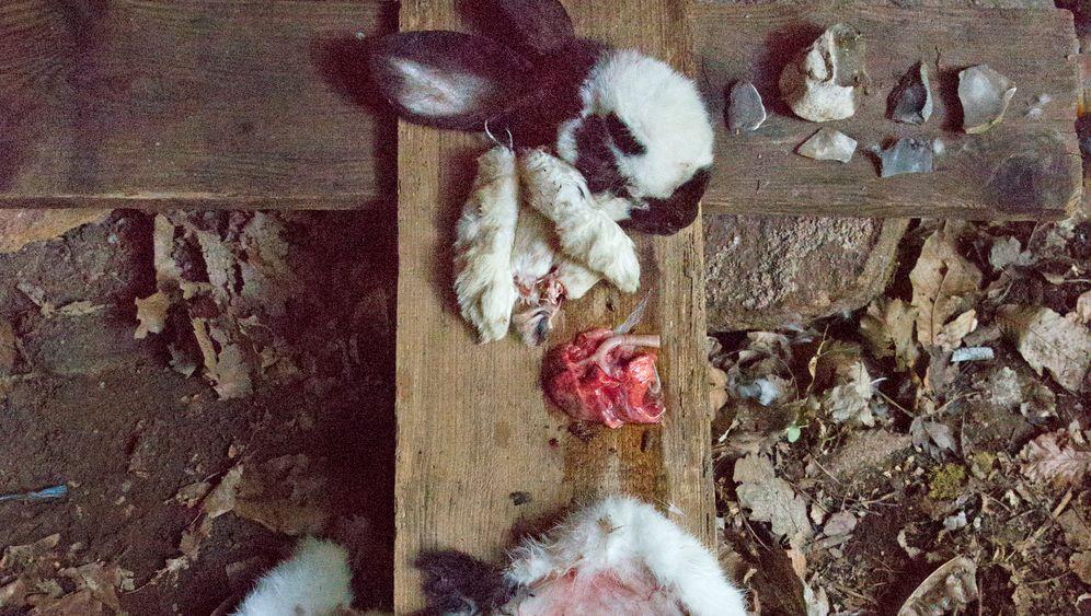 Südtiroler Survivalcamp: Überleben mit Steinkeil und Kaninchenfell