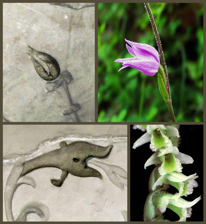 Orchideenblüten auf einem römischen Fries und in der Natur: Beliebte Blume
