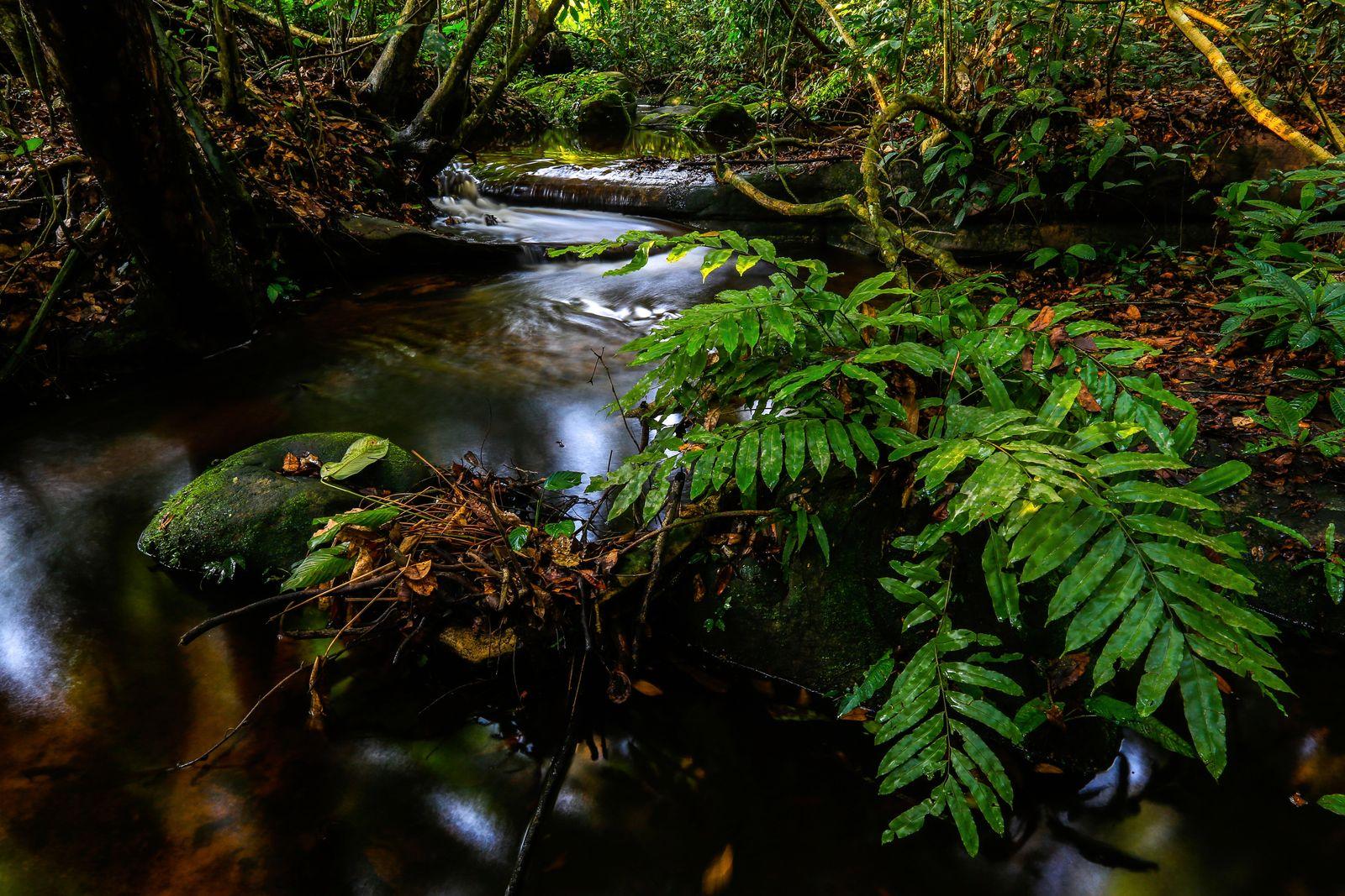 Gabon ogooue ivindo ivindo national park