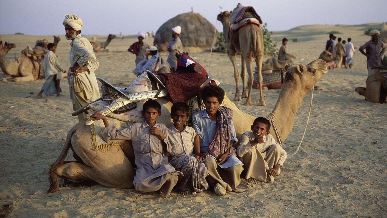 Kamele Wert