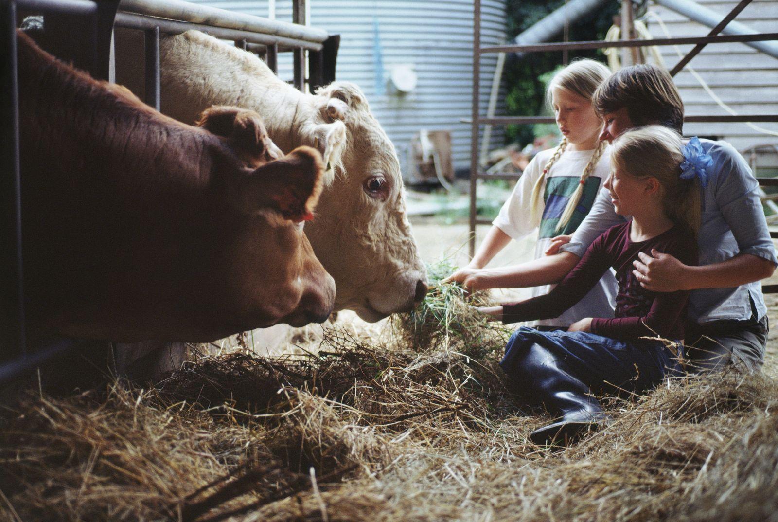 NICHT MEHR VERWENDEN! - Kinder/ Kühe/ Bauernhof
