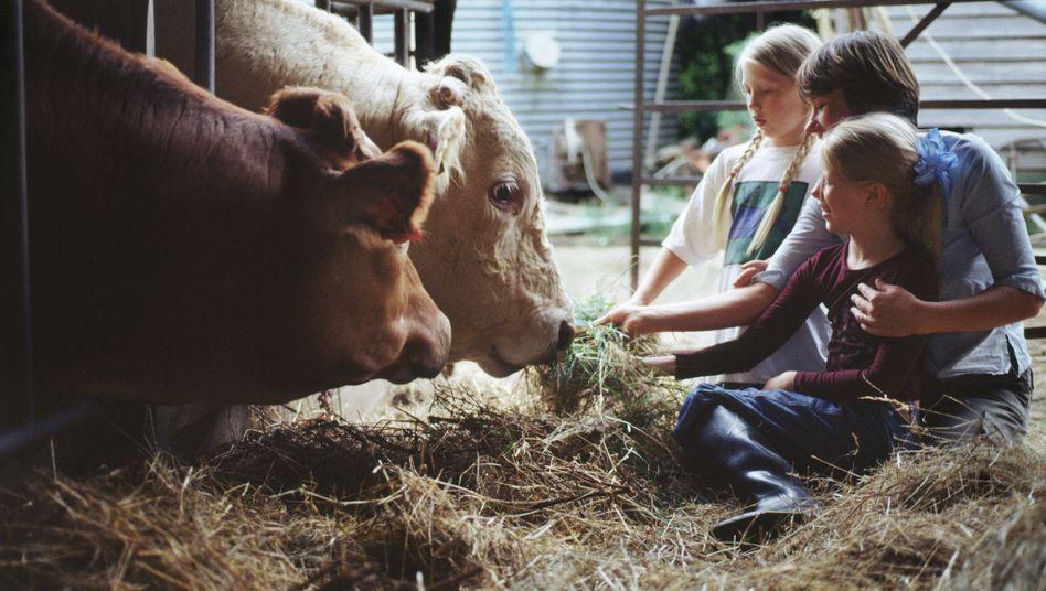 Kinder auf Bauernhof: Segensreicher Staub