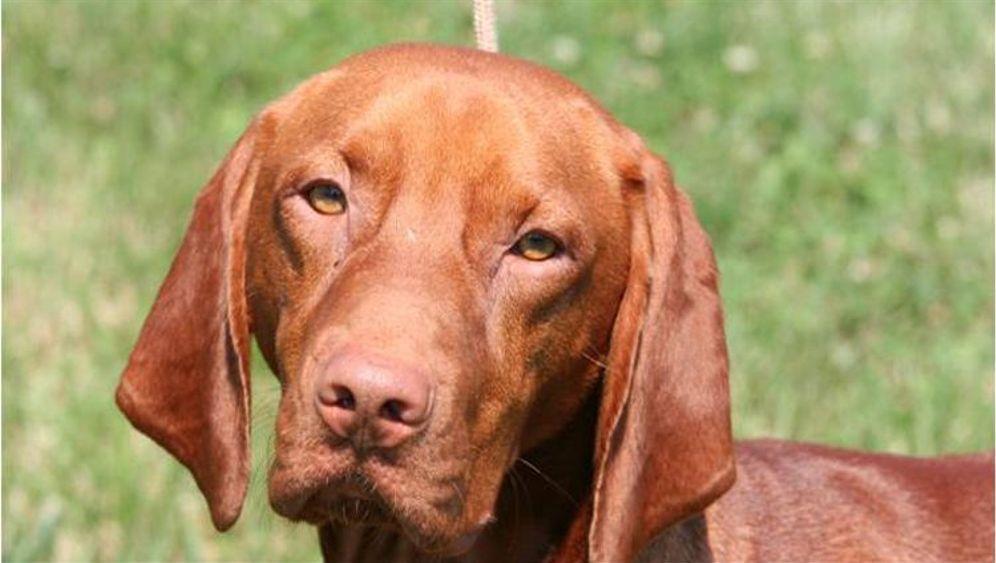 Hundefell: Glatt, lockig oder kraus