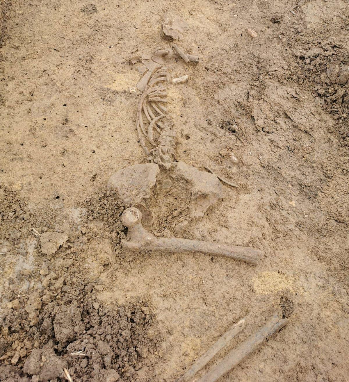 Skelettfund in Ergolding