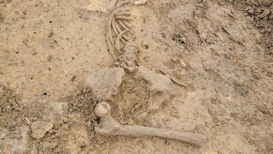 Die Polizei veröffentlichte Bilder des Skelettfunds